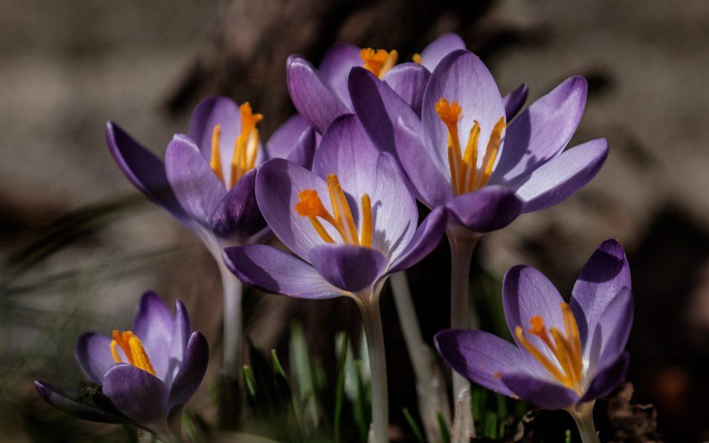 Fasten, Online-Fasten, Frühjahrsputz