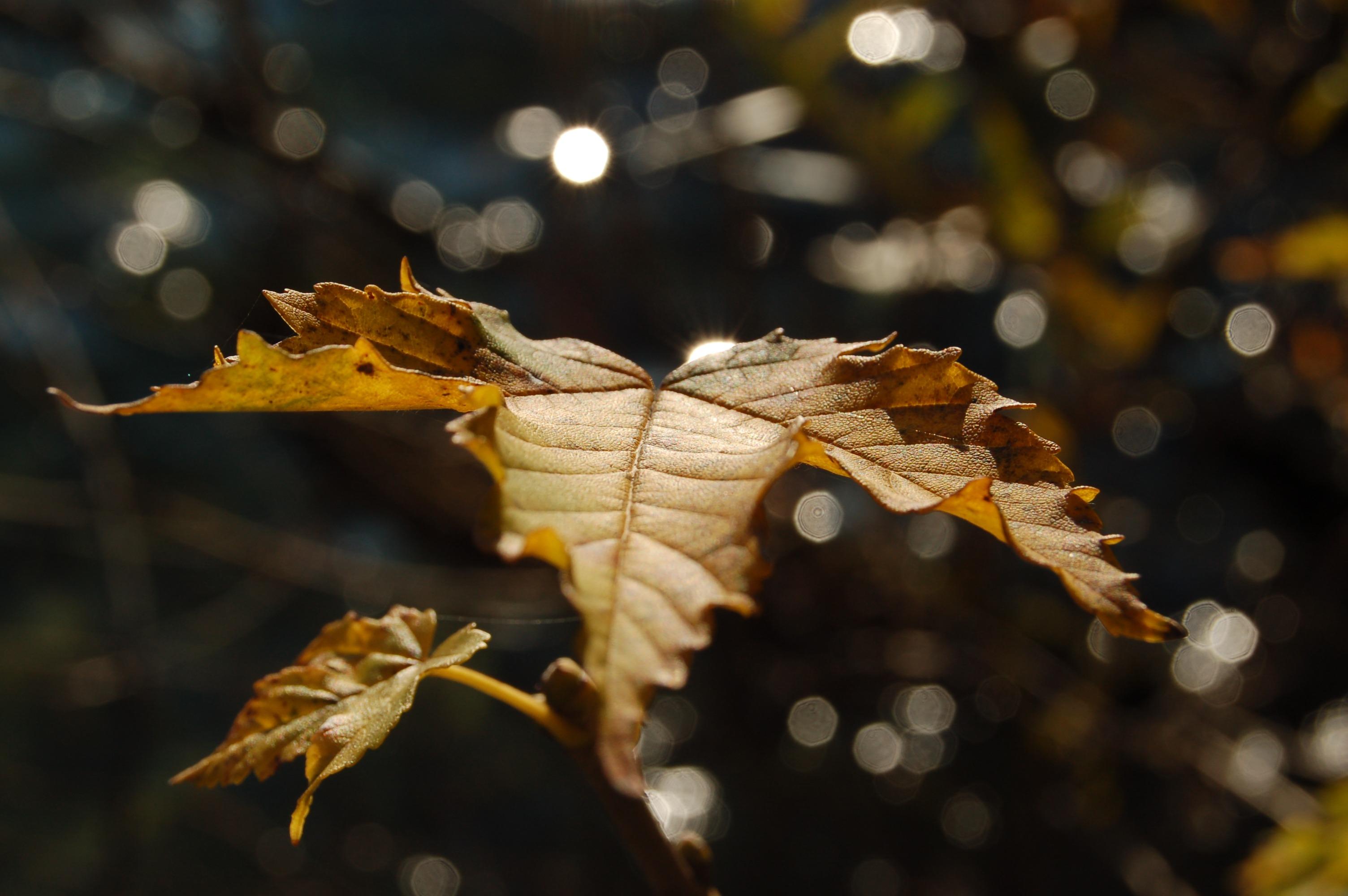 Fasten im Herbst